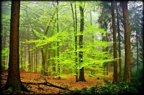 paisajes naturales de bosques y árboles verdes (5)